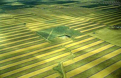 Fast Flight Over Wheat Field. Aerial Low Height Stock Footage ...