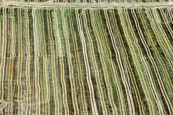 airphoto aerial photograph of crop rows weld county